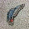 Swallow Wing: Catania, June (detail)