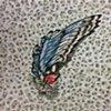 Swallow Wing: Catania, June