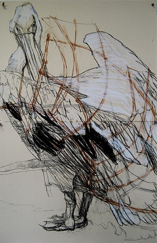 Diane Richey drawing