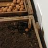 Plant - Installation