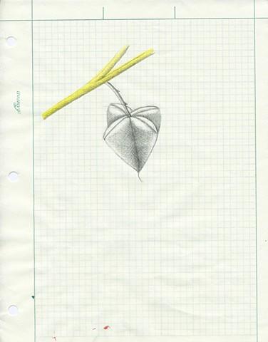 TREES: Pencil Pod