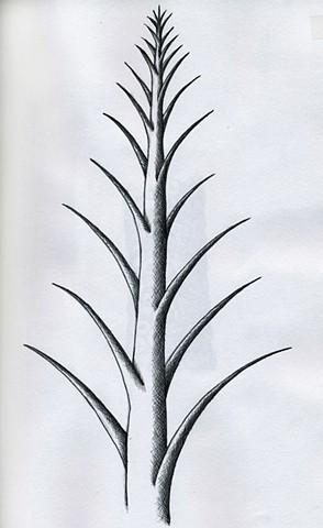 TREE: Pointy Chiaro