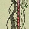 TREE: TWO DANCERS: Droop