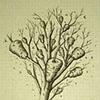 TREE: WASP