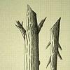 TREE: STUMP: Half 'n Half