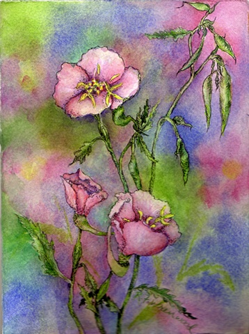 Oenothera speciosa, Pink Evening Primrose, wildflower, watercolor, pen and ink