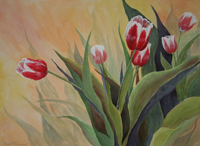 red, white tulips, orange background