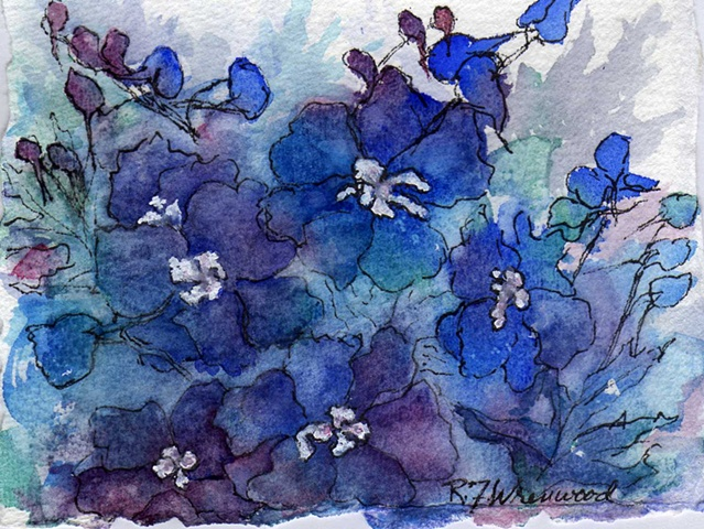 Small, loose painting of Delphiniums with watercolor and ink in shades of blue