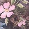 Wild Roses at Dusk