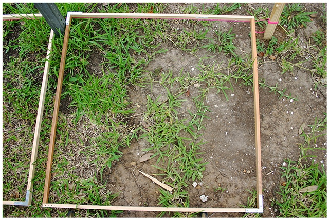 Planting Into the Grid, 2009 Row 2, Image 1, July 24, 2010