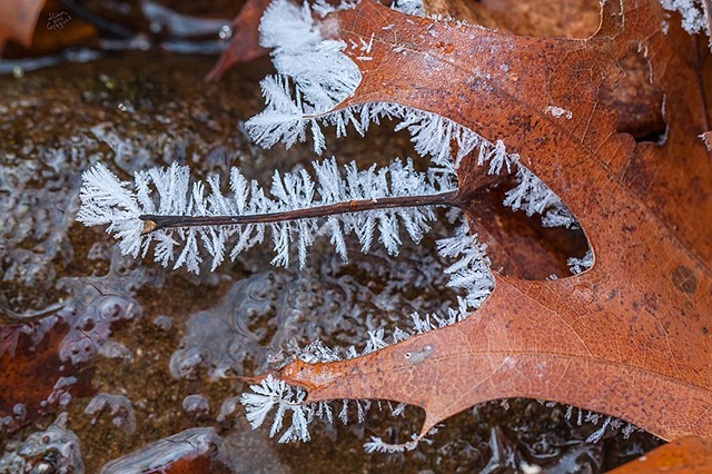 2012 Ice Catskill Mountain Winter Macro Photo