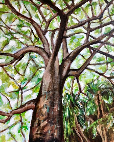 Magnificent tree photographed by the artist in Guanacaste, Costa Rica.