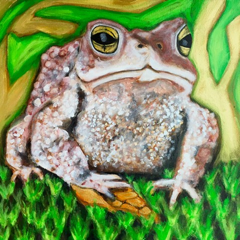 American Toad 2