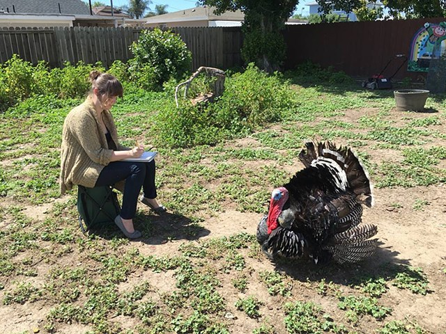 Sketching a Friend's Turkey in the East Bay of San Francisco, which stayed very still glaring at me for hours - the perfect subject!