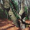 Epping Forest Shrine 1
