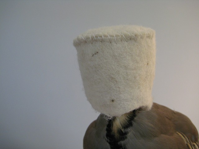 Investigations in experimental garments for animals #11