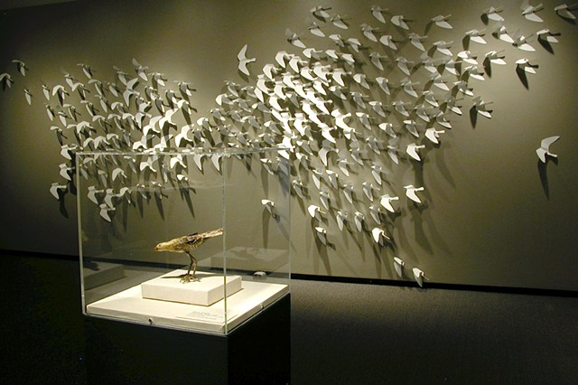 Twice : Migration installed at Boise Art Museum as part of Birds of a Feather exhibition curated by Sandy Harthorn