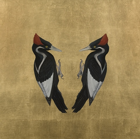 Still Life - Ivory-Billed Woodpecker