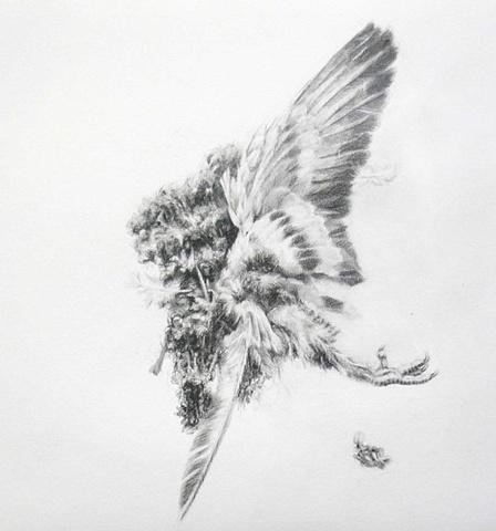 Road Still Series (Pigeon)