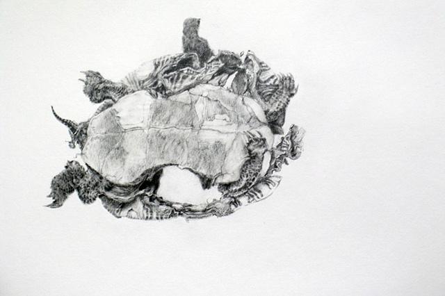 Road Still Series (Turtle)