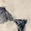 Lead Moths