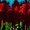 Secrets of the Trees