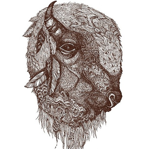 Buffalo Illustration