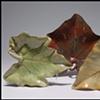 Leaf Plates