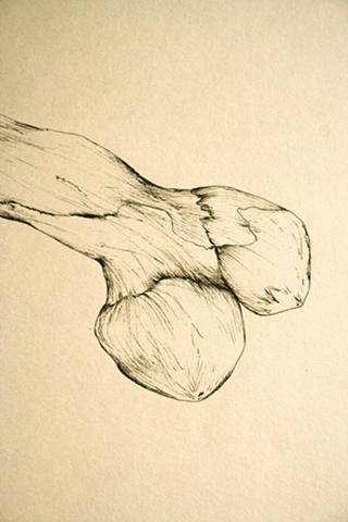 A bone, detail
