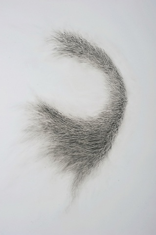 biomoprhic drawing based on natural phenomena & mutation