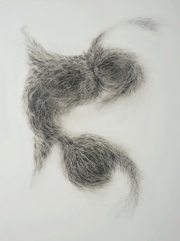 Graphite drawing on vellum based on organic phenomena & mutation