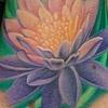 lavender lotus