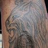 Scar cover with Lion
