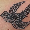 sparrow cover up