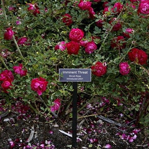 Imminent Threat From The National Rose Garden Series