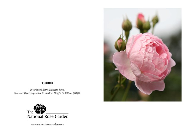 Selections From The National Rose Garden Notecard TERROR