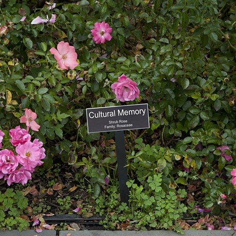 Cultural Memory  From The National Rose Garden Series