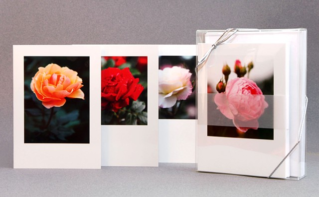 Selections From The National Rose Garden Notecards