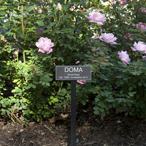 DOMA From The National Rose Garden Series