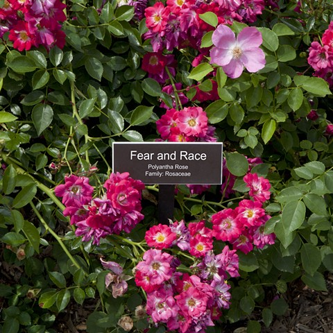 Fear and Race From The National Rose Garden Series