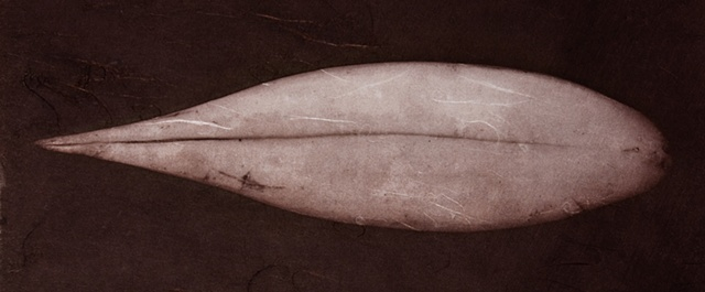 Vandyke Brown Print, a historical and alternative photographic process from a scanned object