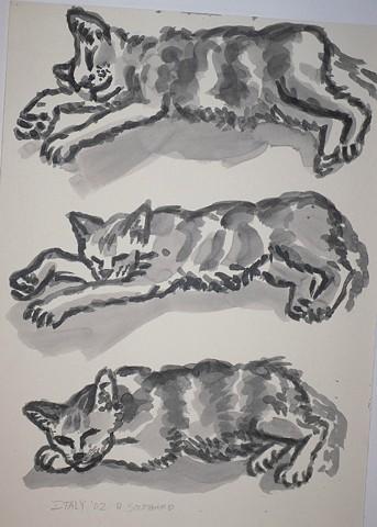 No. 29  (Umbria Cats)