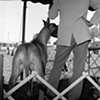 Dog Show at the Fair Grounds