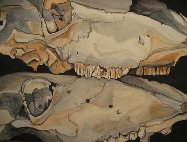 Cow Skulls - Still Life