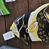 Black and Gold Reef Fish