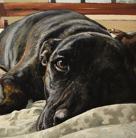 Matt Lively dog portrait