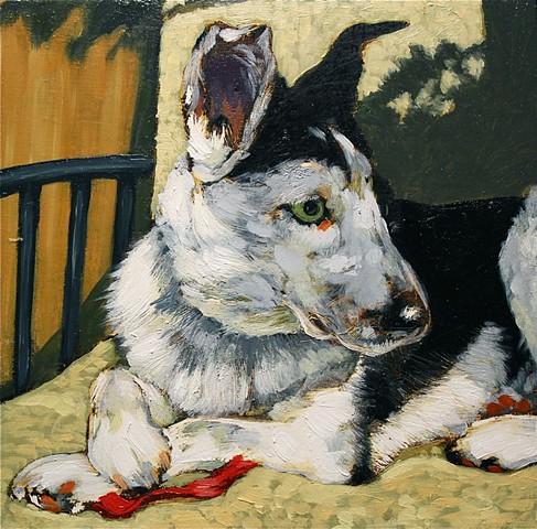 dog portrait matt lively
