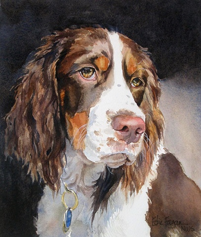 Edie Fagan Adored Dogs watercolor portrait of dog watercolor painting of English springer spaniel dog