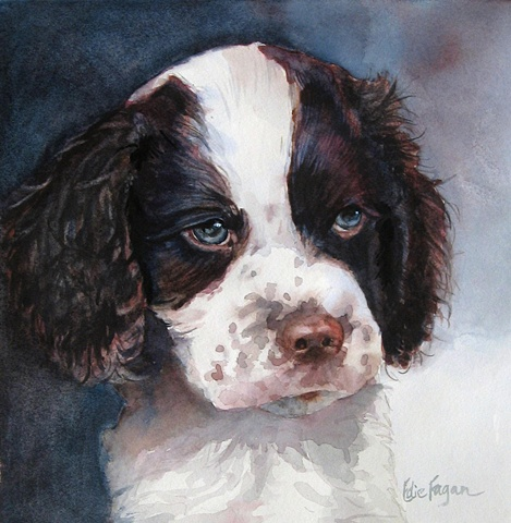 Edie Fagan Adored Dogs watercolor painting of dog watercolor painting of English springer spaniel puppy dog
