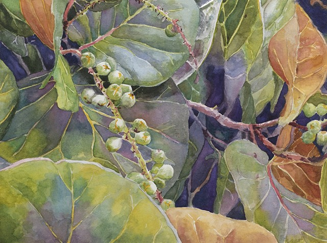 watercolor of sea grapes by Edie Fagan